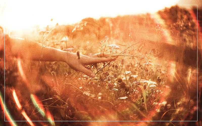 hands and wild flowers